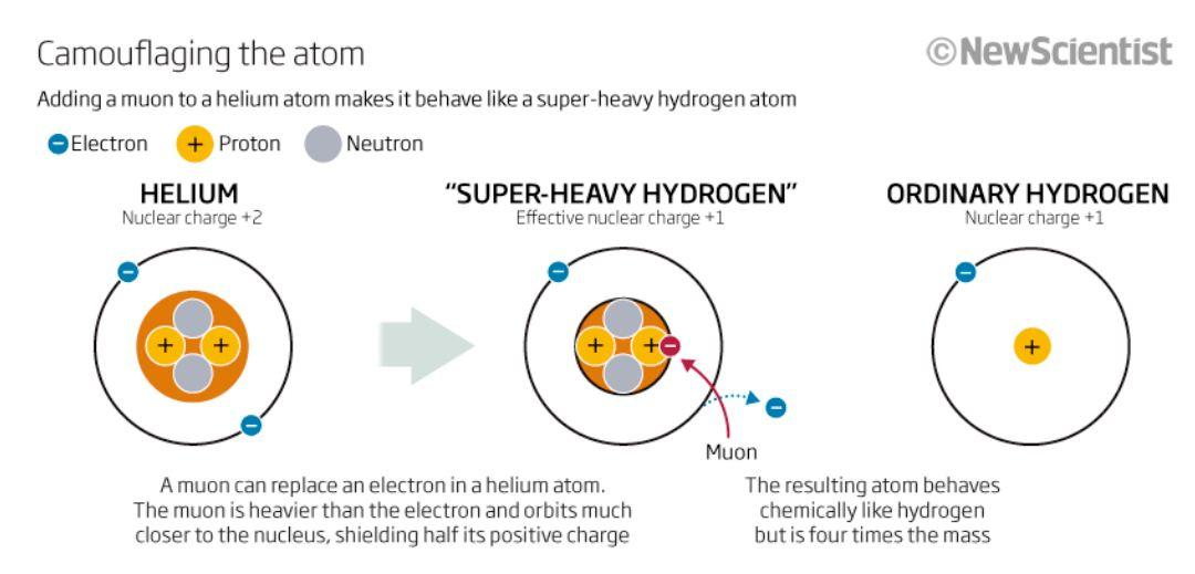 Muons extending the h atom isotopic mass scale in reaction rate muonium ccuart Image collections